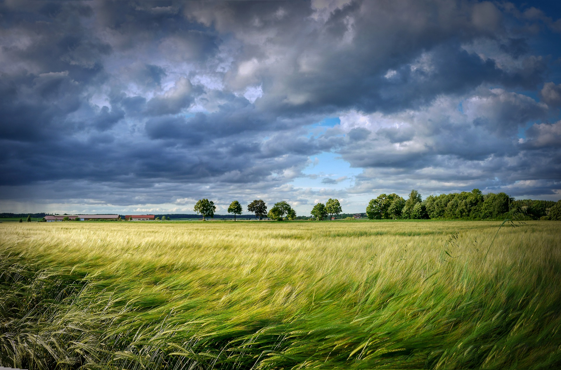 Łąka na tle zachmurzonego nieba